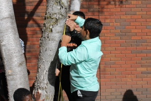 Students use tree measurements and growth rate factors to estimate the age of various trees